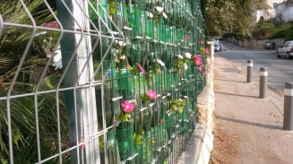 Vertical plastic bottle garden on a school wall